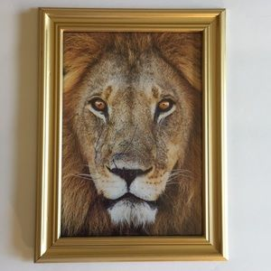 """New Gold Lion Photo & Frame""""5""""by""""7""""Inches Leo Lion"""